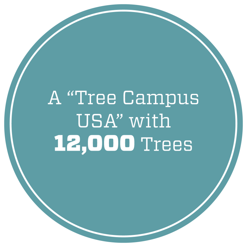 "A ""Tree Campus USA"" with 12,000 trees."