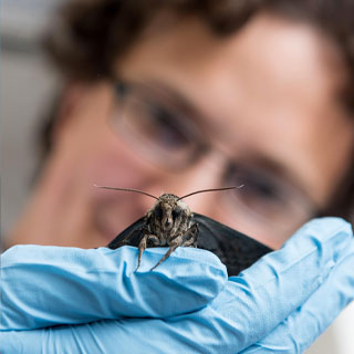 Physics Professor Simon Sponberg holds a moth he studies.